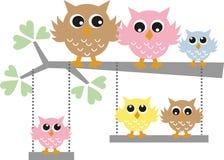Família colorida da coruja Imagens de Stock