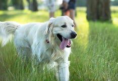 Família com o cão bonito no parque Imagens de Stock