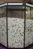 Família da larva de farinha Foto de Stock Royalty Free