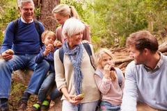 família da Multi-geração que come junto em uma floresta fotografia de stock royalty free