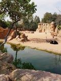 Família das avestruzes na natureza Fotos de Stock