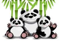 Família das pandas Fotos de Stock
