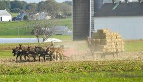 Família de Amish que colhe os campos em Autumn Day pinta 3 fotografia de stock