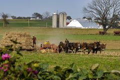 Família de Amish que colhe os campos em Autumn Day pinta 1 imagem de stock