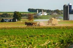Família de Amish que colhe os campos em Autumn Day pinta 5 fotos de stock royalty free