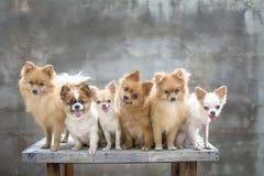 Família de cães Imagem de Stock