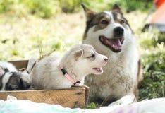 Família de cão feliz que teme nem a consternação nem o problema e será junto até o vertebrado imagem de stock