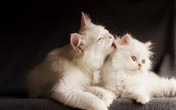 Família de gato imagem de stock