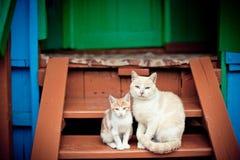 Família de gatos - pai e filho Fotos de Stock Royalty Free
