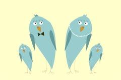 Família de pássaros engraçada do quivi Fotografia de Stock Royalty Free