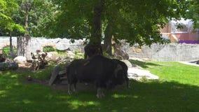 família do Almíscar-boi no parque natural filme