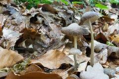 Família do cogumelo Fotos de Stock Royalty Free