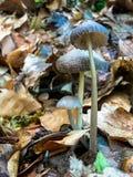 Família do cogumelo Imagem de Stock