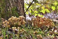 Família do cogumelo Fotos de Stock