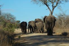 Família do elefante Fotos de Stock