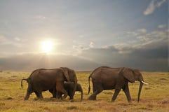 Família do elefante Fotografia de Stock Royalty Free