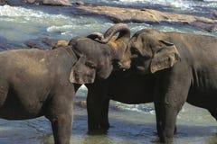 Família do elefante fotos de stock royalty free