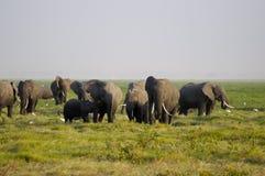 Família do elefante africano imagens de stock royalty free