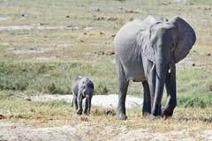 Família do elefante africano foto de stock royalty free
