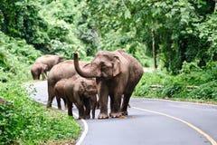 Família do elefante asiático imagem de stock