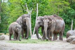 Família do elefante em um jardim zoológico de Berlim, Alemanha Imagens de Stock