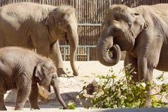 Família do elefante no jardim zoológico imagens de stock royalty free