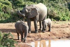 Família do elefante no waterhole Imagem de Stock