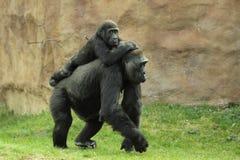 Família do gorila foto de stock royalty free