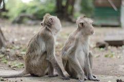 a família do macaco imagens de stock