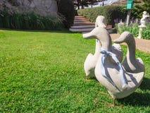 Família do pato na grama verde Foto de Stock