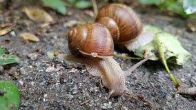 Família dos caracóis com um caracol pequeno agradável no shell imagem de stock royalty free