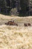 família dos cervos imagens de stock royalty free