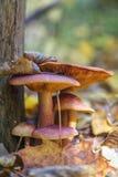Família dos cogumelos Fotos de Stock
