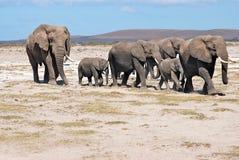 Família dos elefantes Foto de Stock Royalty Free