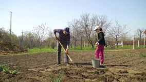 Família dos fazendeiros que planta batatas no campo vegatable na mola adiantada filme