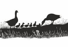 Família dos gansos no prado da mola ilustração royalty free