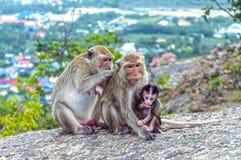 A família dos macacos Imagens de Stock Royalty Free