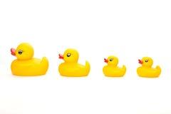 Família dos patos em uma linha Foto de Stock Royalty Free