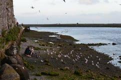 Família e gaivotas nas margens do rio Corrib em Galway, Irlanda Imagens de Stock