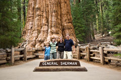 A família está levantando na sequoia Foto de Stock Royalty Free