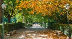 A família explora o jardim público do parque do ` s Retiro da Espanha imagens de stock