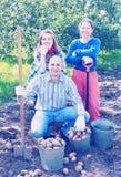 Família feliz que colhe batatas foto de stock