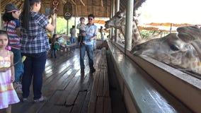 a família 4K com crianças está alimentando um girafa no jardim zoológico do mundo do safari em Banguecoque vídeos de arquivo