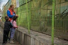 Família-mãe aciganada com as crianças no jardim zoológico fotografia de stock
