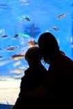 Família no aquário Foto de Stock Royalty Free