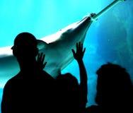 Família no aquário fotos de stock