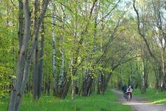 Família no bicicletas no parque Imagens de Stock Royalty Free