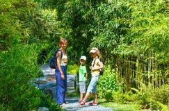 Família no bosque da árvore de bambu imagens de stock