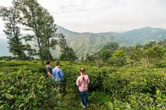 Família no país do chá imagens de stock royalty free