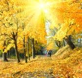 Família no parque do bordo da luz do sol do outono Imagem de Stock